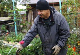 О цветущей в ноябре клубнике, деформированных бутонах роз, обрезке вейгелы. Отвечаем на вопросы садоводов-огородников