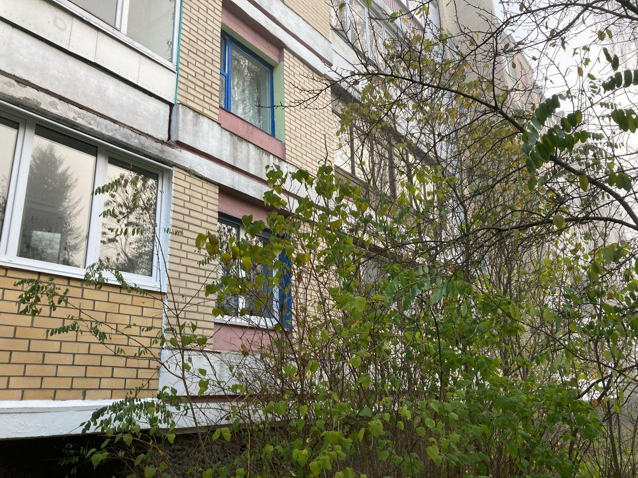 Кустарник возле окна квартиры Любови Масель 11 ноября. Фото: Ирина КОМИК