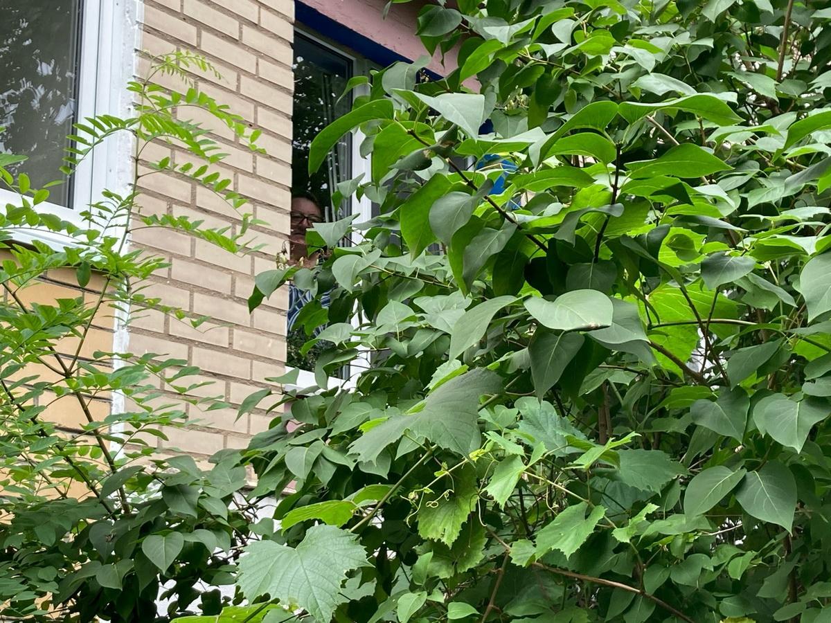 Кусты возле окна Любовь Масель в конце августа. Фото: Ирина КОМИК