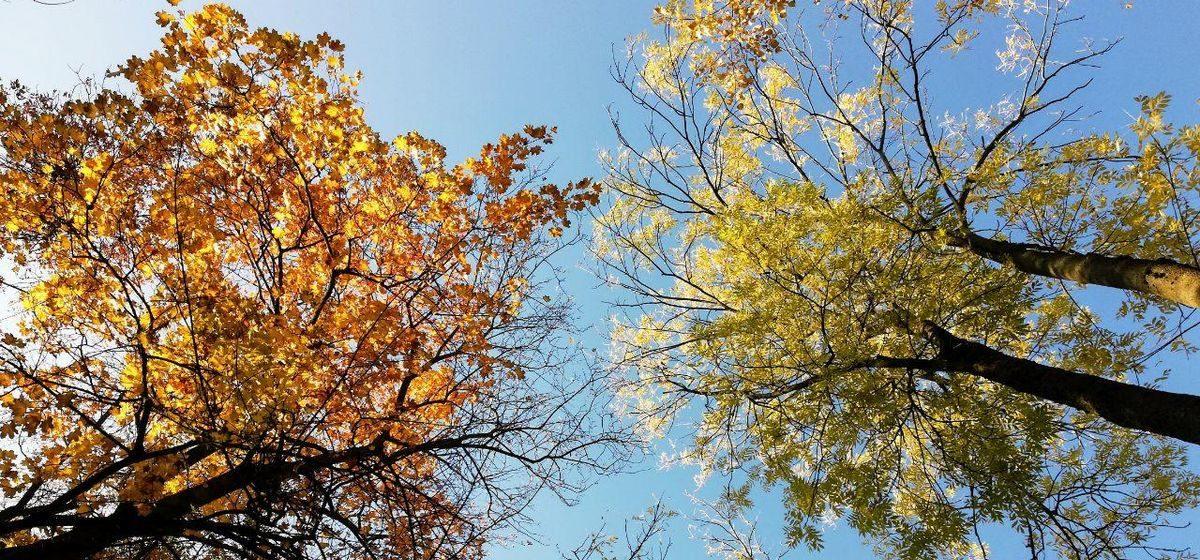 Ждать ли в выходные дожди? Прогноз погоды на 7-9 ноября в Барановичах