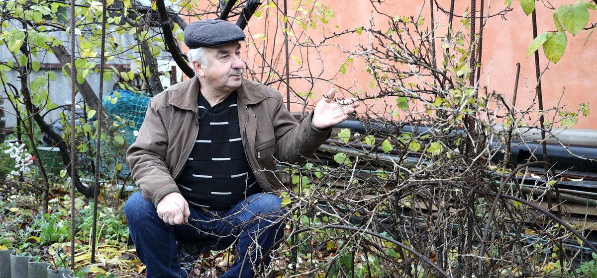 Как размножить смородину рассказывает известный агроном Петр Ломонос