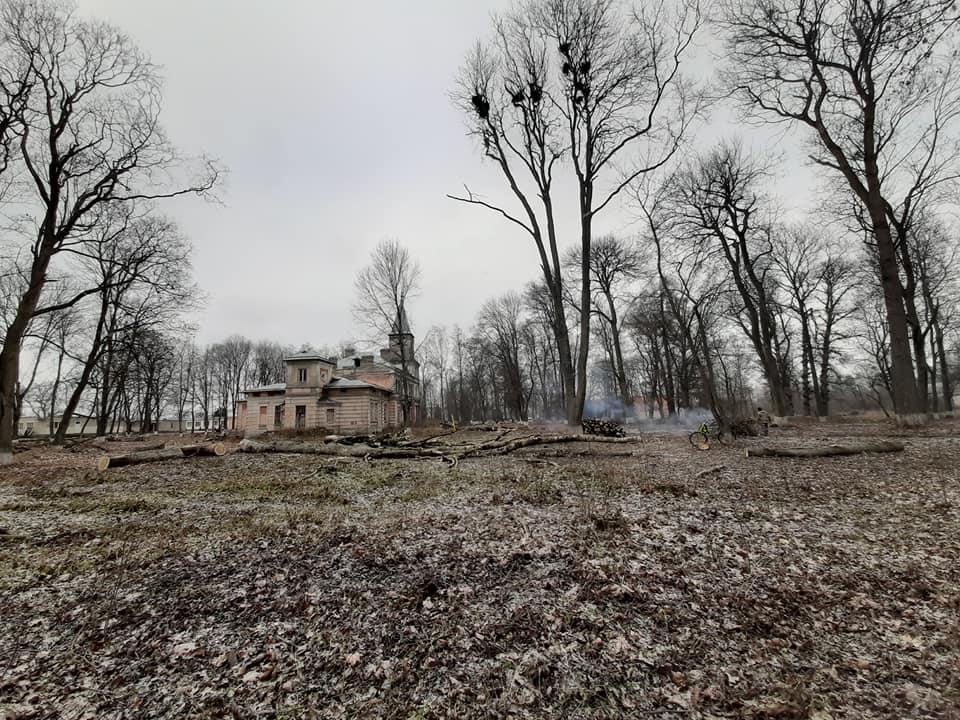 Спиленные деревья на территории памятника природы, возле усадьбы Котлубаев в Ястрембеле. Фото: Владимир ЗУЕВ