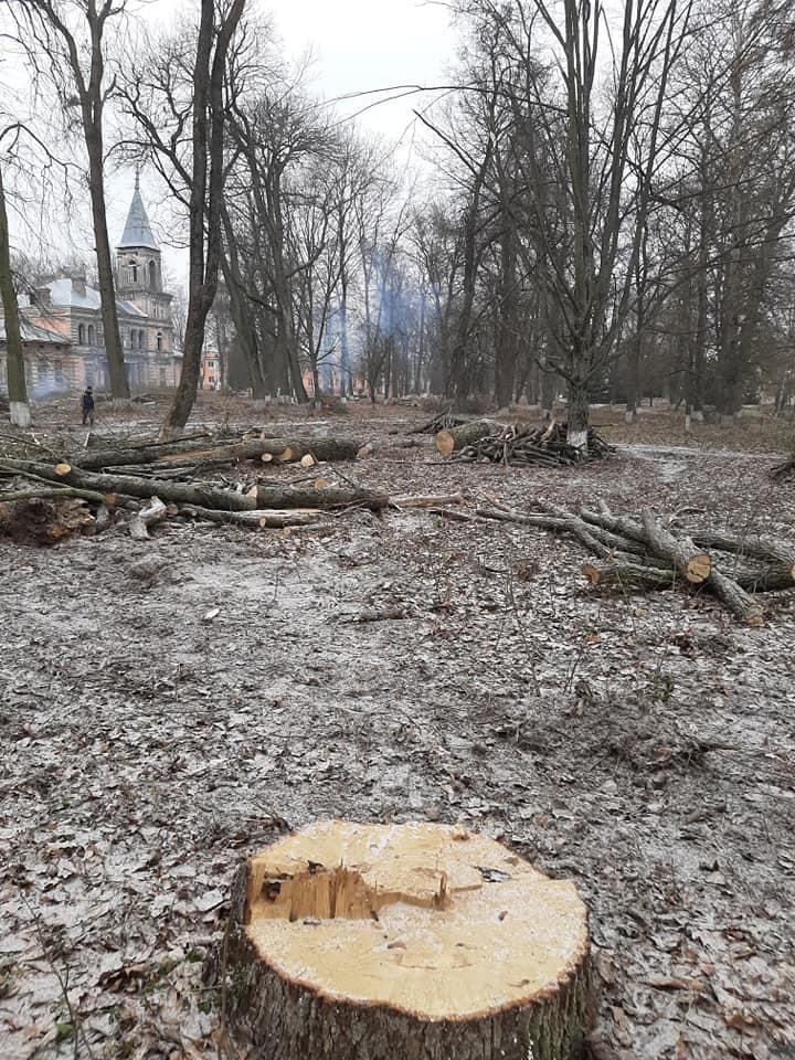 Спиленные деревья на территории памятника природы в Ястрембеле. Фото: Владимир ЗУЕВ
