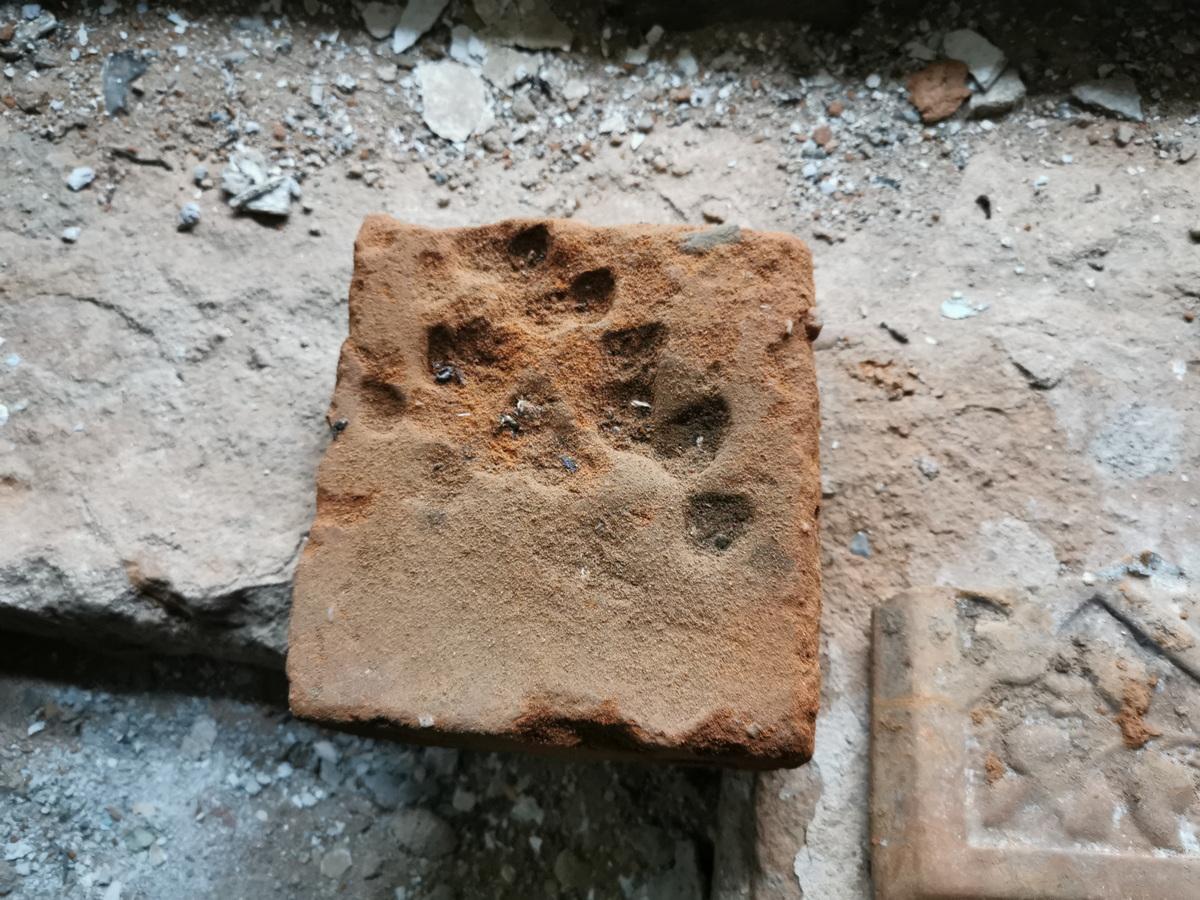 Кирпич со следами лап собаки. Обнаружен в бывшем доме для рабочих в д. Нижнее Чернихово. Фото: Виктор БОРИСЕВИЧ