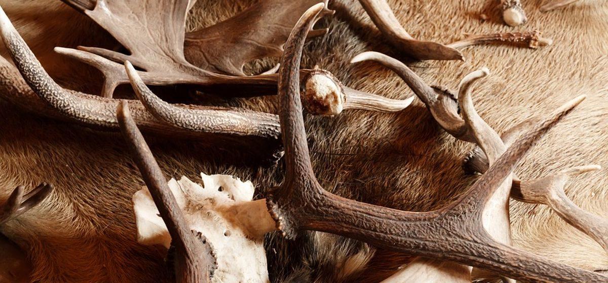На каких парнокопытных животных запрещено охотиться с 1 января, а на каких можно