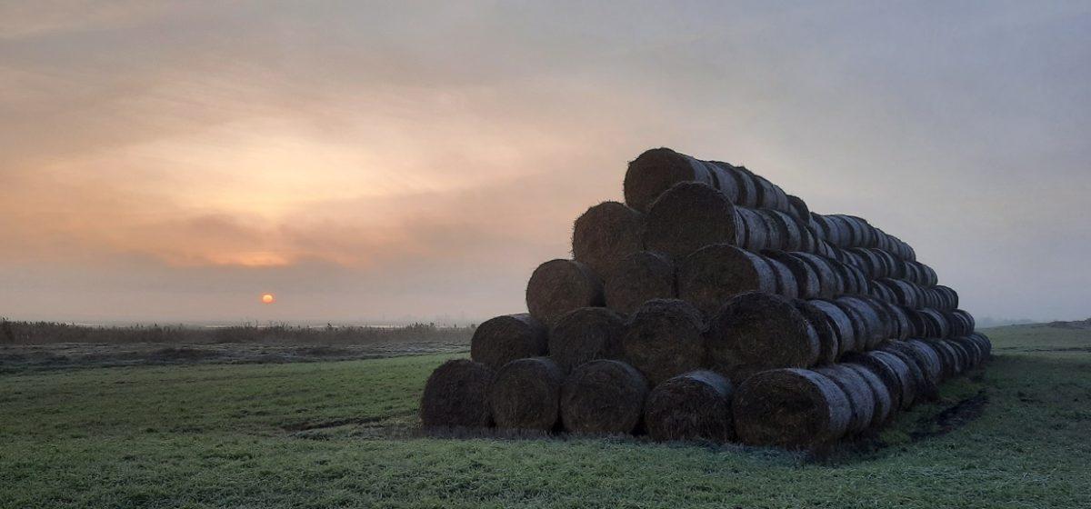 Как я искала несанкционированные свалки и навозные стоки в экоэкспедиции по Барановичскому району
