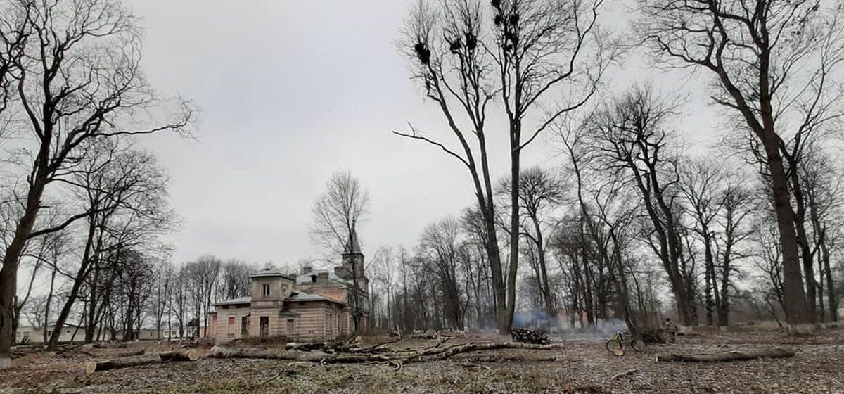 Десятки старинных деревьев вырубают на территории памятника природы в Барановичском районе