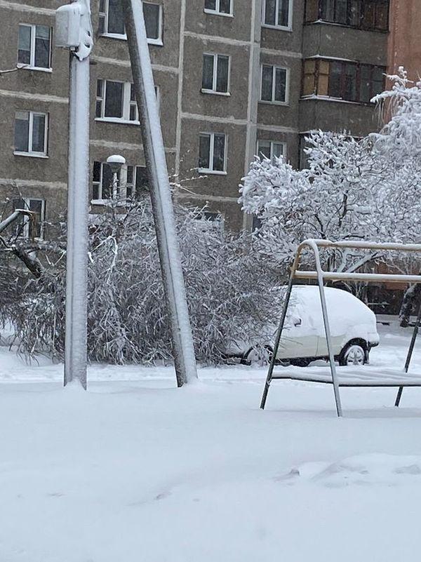 Дерево упало на автомобиль на ул.Орджоникидзе в Барановичах. Фото:  chistota_by