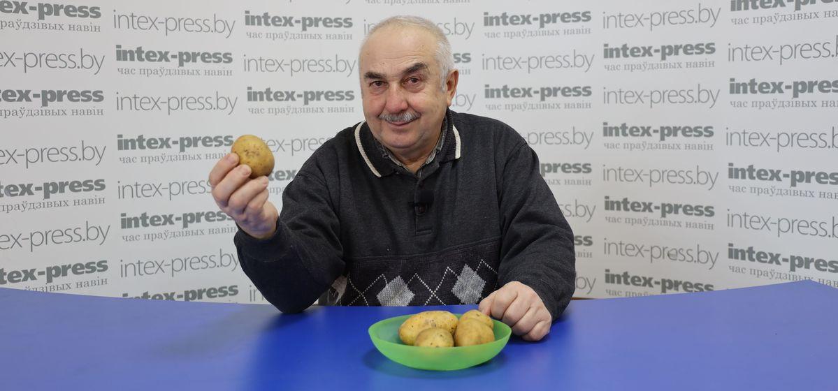Как оздоровить картофель, чтобы получать ведро урожая с куста