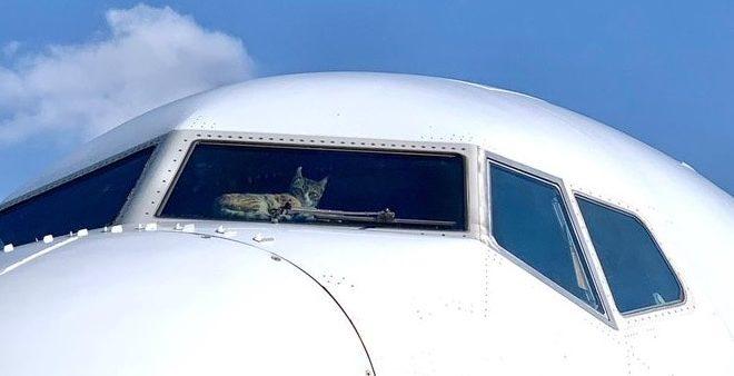Кота на две недели забыли в пустом самолете. И вот что он там сделал
