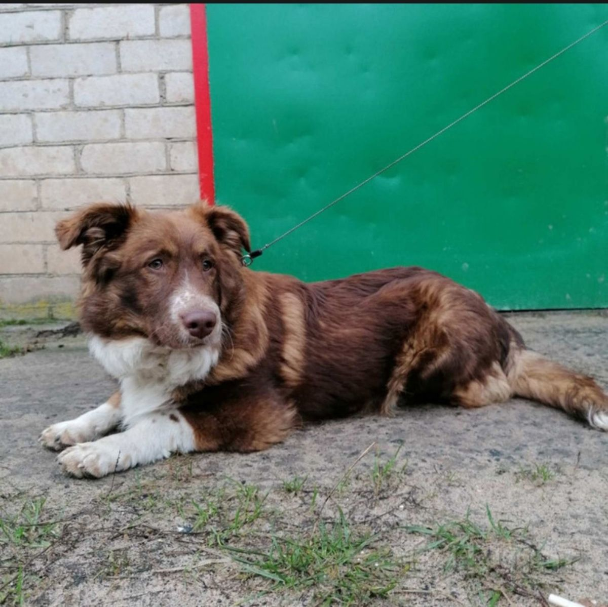 Собака Тоша ждет добрых людей, которые примут его в свою семью. Фото: Людмила ШИБУТ
