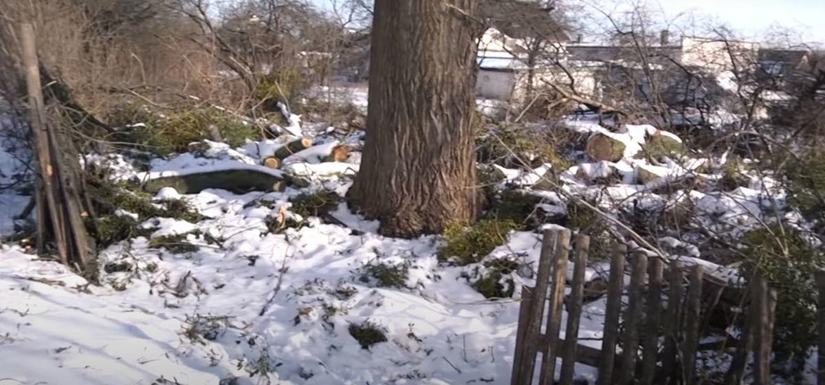Пока хозяина не было, коммунальщики Пинска разломали забор и спилили во дворе деревья. Видео