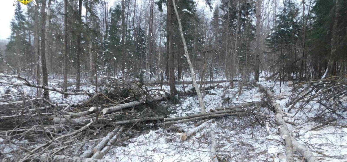 Дерево насмерть придавило вальщика леса в Сенненском районе