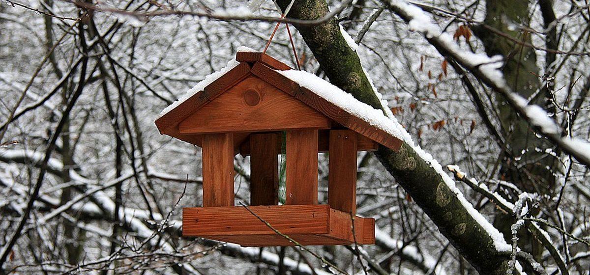 Как в Барановичском регионе в сильные морозы заботятся о лесных животных и птицах