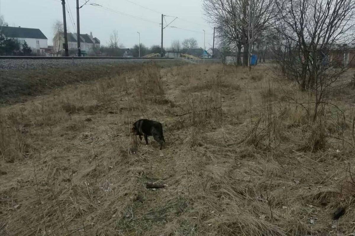 Собака, которую вытащили из колодца сотрудники Барановичского ГРОЧС. Фото: «Инстаграм» Барановичского ГРОЧС