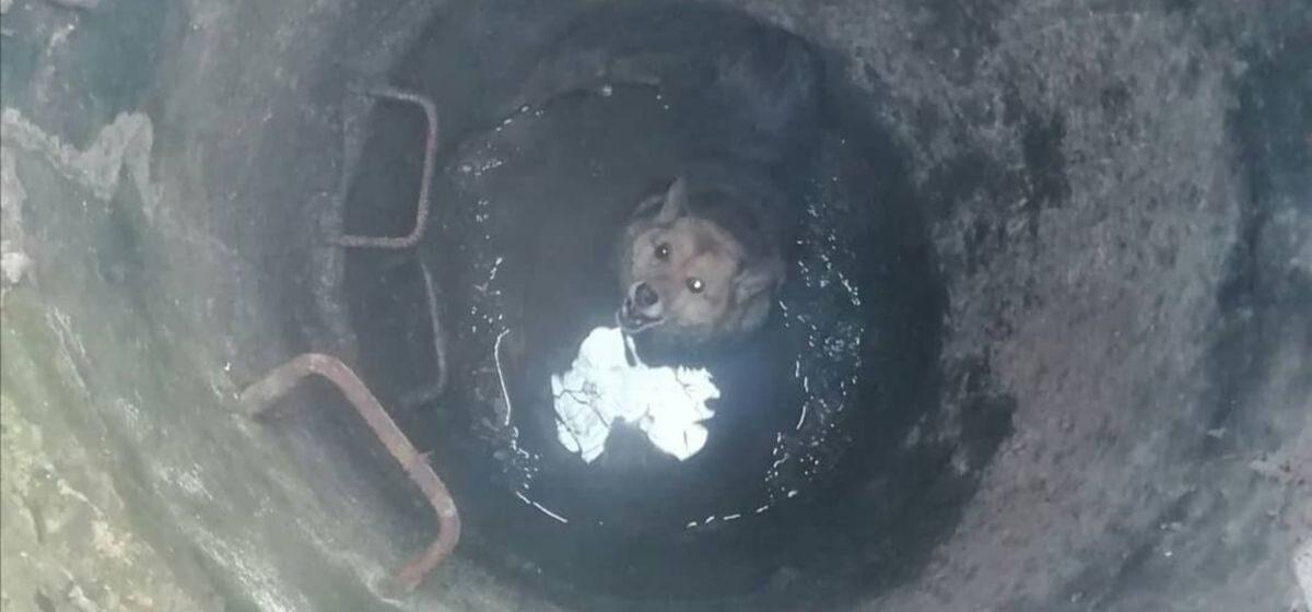 Сняли с дерева кота, а из колодца достали собаку. Барановичские спасатели за один день помогли двум животным