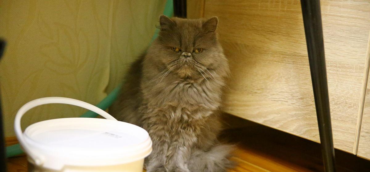 «Благодаря кошке проспать на работу невозможно». Жители Барановичей рассказали о своих усатых-полосатых членах семьи