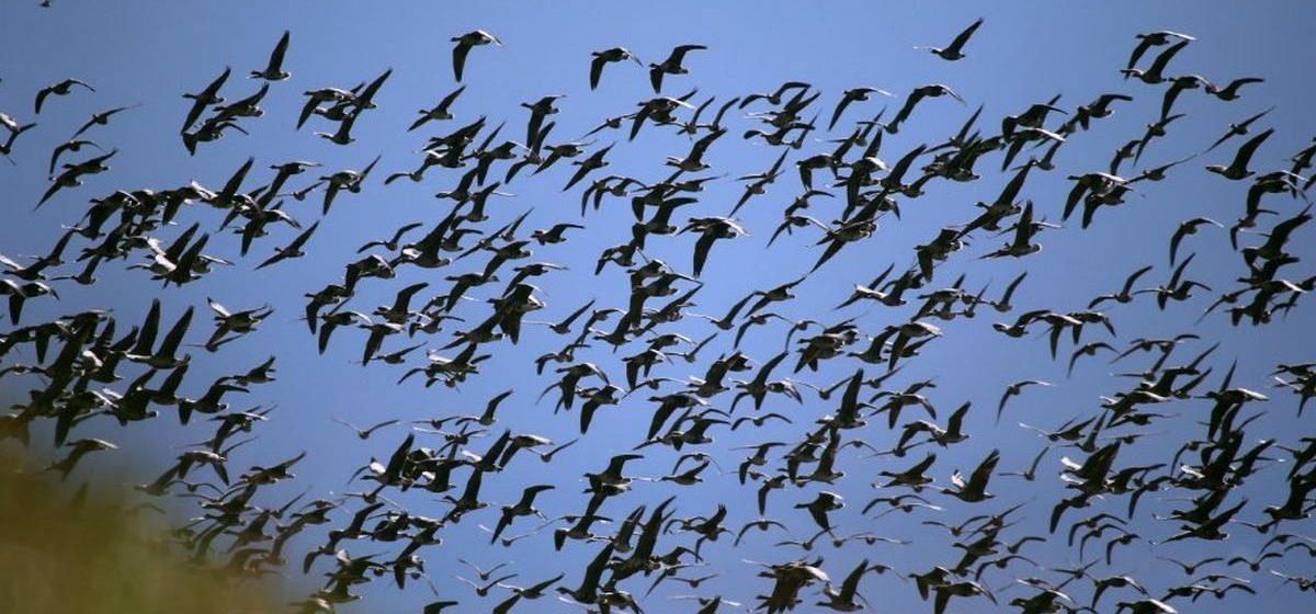 Тест. Хорошо ли вы знаете птиц Беларуси?