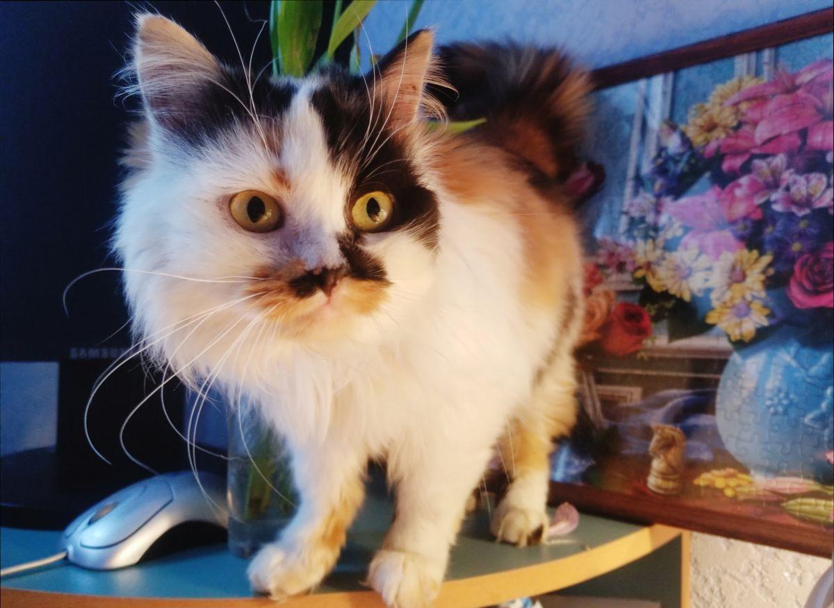 Кошка Маруся ждет заботливых хозяев. Фото: Людмила ШИБУТ