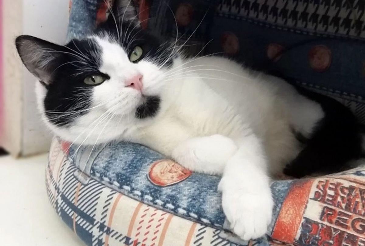 Харизматичный кот Изюм ищет себе дом и заботливых хозяев. Фото: Людмила ШИБУТ