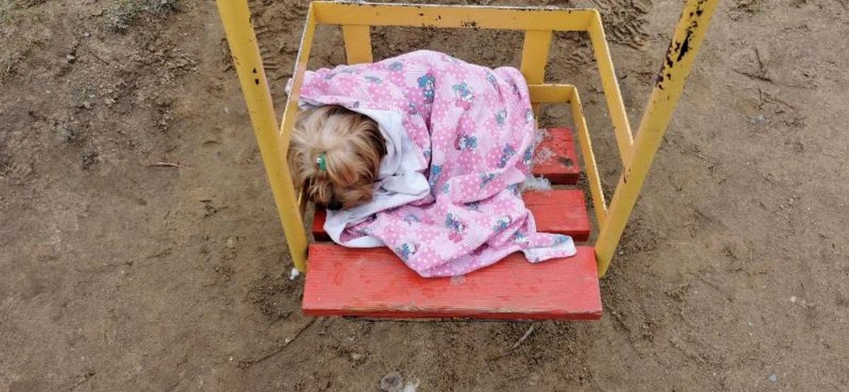 В Барановичах лапка собачки застряла в качелях. Хозяйка вызвала МЧС