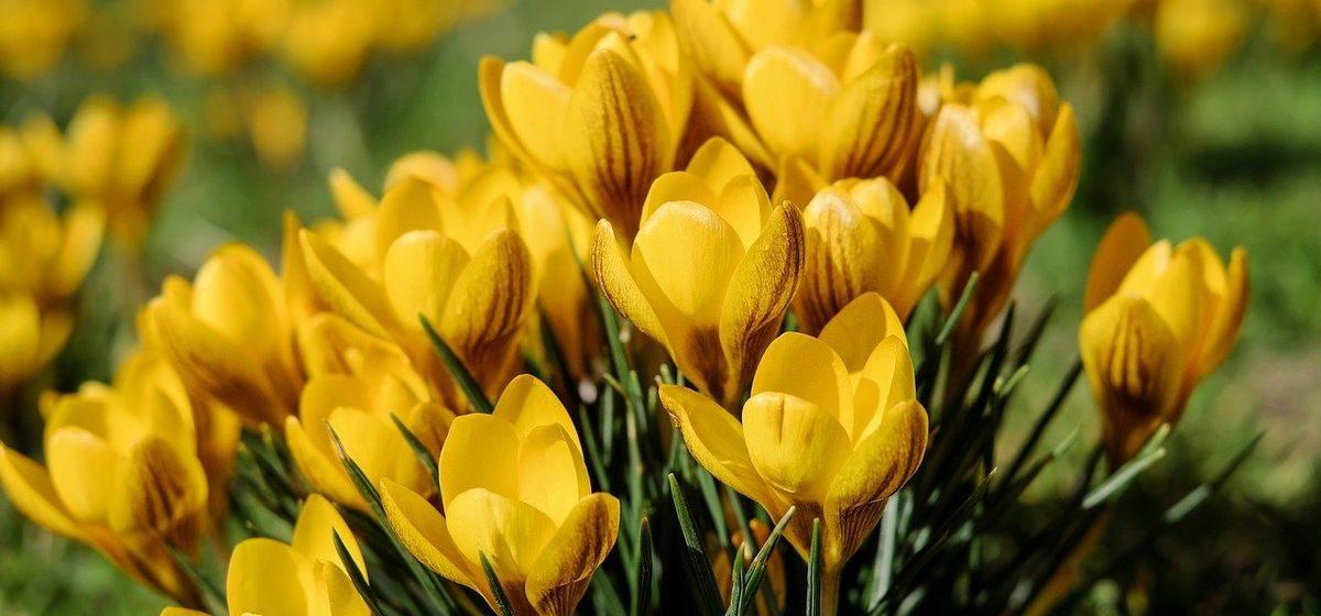 Неужели наступает весна? Прогноз погоды на 23-25 марта в Барановичах