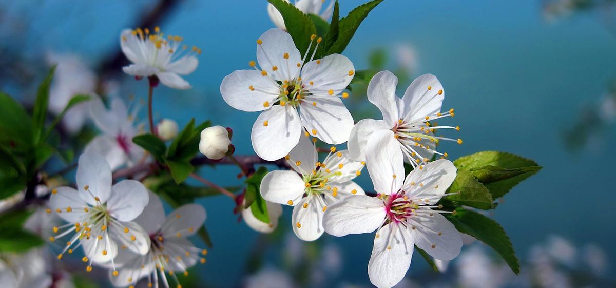 Тест. Как хорошо вы помните песни прошлых лет про весну?