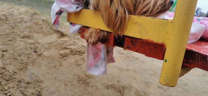 собака затряла в качелях 1