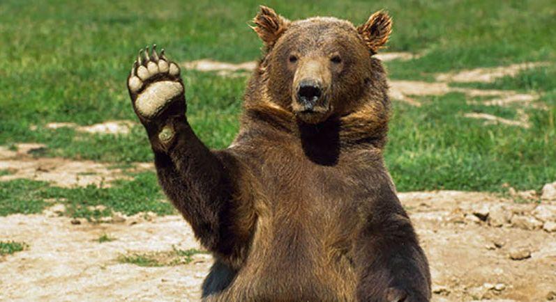 Медведь бегает по полю в Вилейском районе. Видеофакт