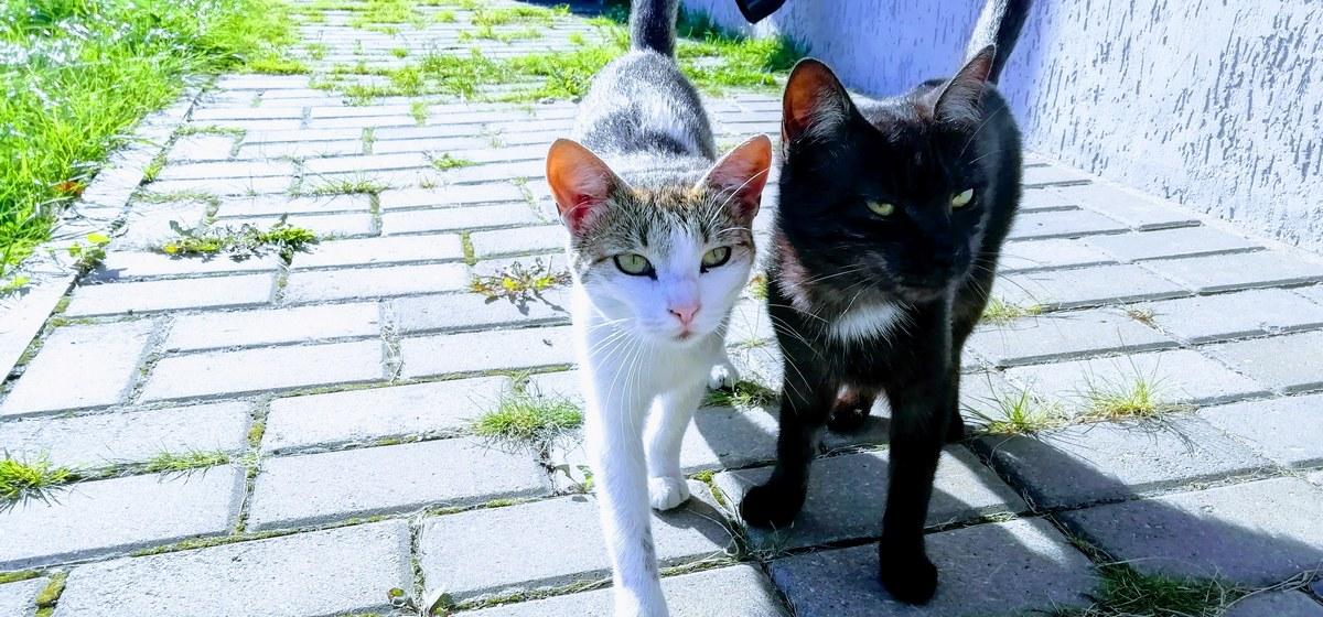 Котики коты
