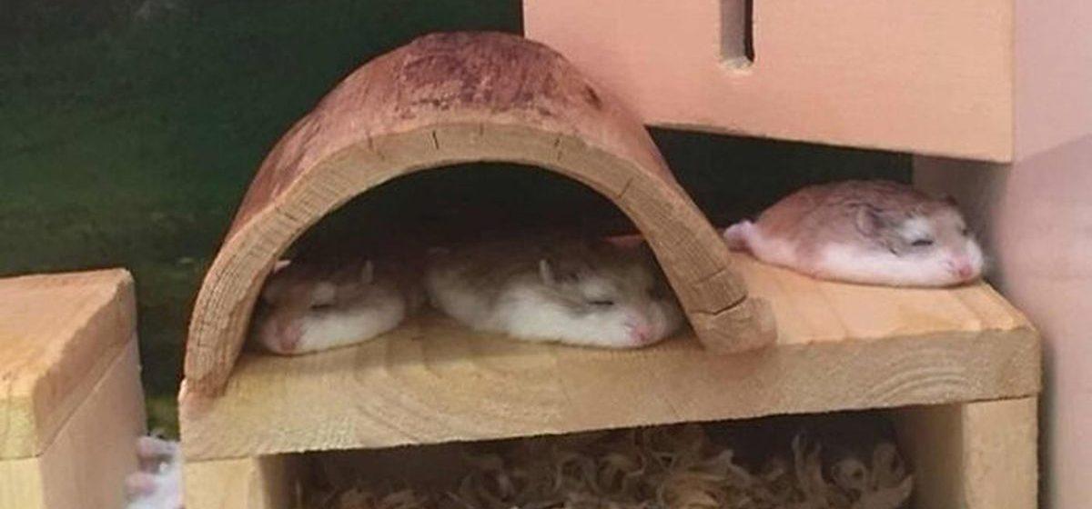 Эти домашние питомцы спят настолько нелепо, что сложно удержаться от смеха. Фото