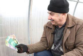 Какие ошибки при выращивании капусты допускают огородники