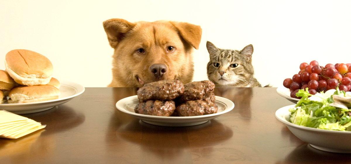 ТОП-10 обычных продуктов, смертельных для котов и собак