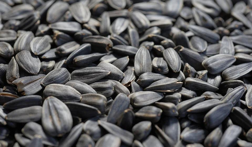 Что произойдет с организмом, если каждый день есть семечки?