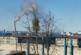 «Белый лист за утро стал черным». На едкий дым из заводской трубы жалуется житель Барановичей