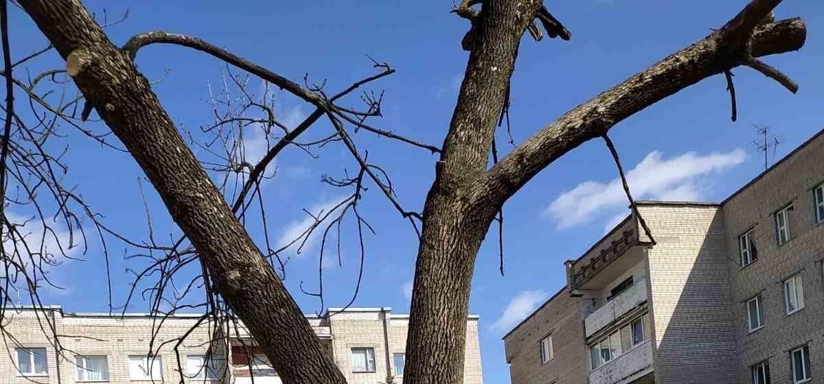«Зачем уродовать деревья?». Жительница Барановичей возмущена тем, как обрезают деревья в городе