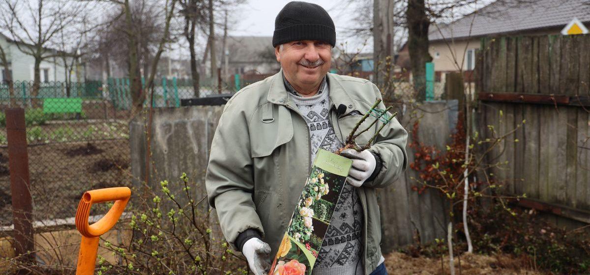 Как правильно сажать розы, купленные в коробке, и как реанимировать «королеву цветов» после зимы