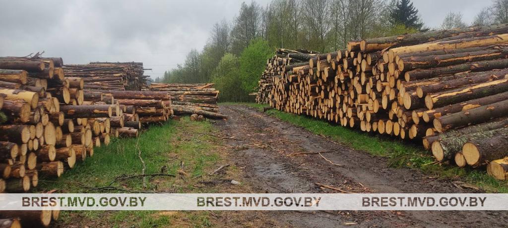 Древесину на сумму более 3600 рублей похитил из лесничества житель Барановичского района