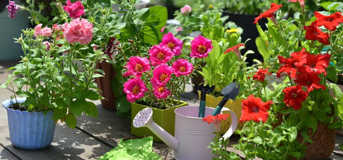 ТОП-7 растений, которые цветут все лето, до морозов