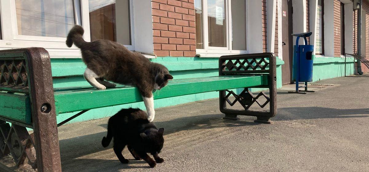 «Это полная дичь!». Методы отлова котов и поведение работников ЖКХ шокировали жительницу Барановичей. Видео