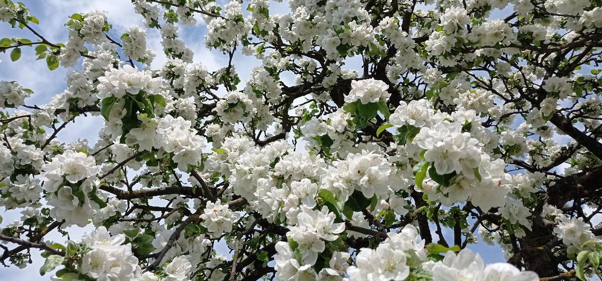 29 мая: какой сегодня праздник, что можно, а что нельзя делать в этот день
