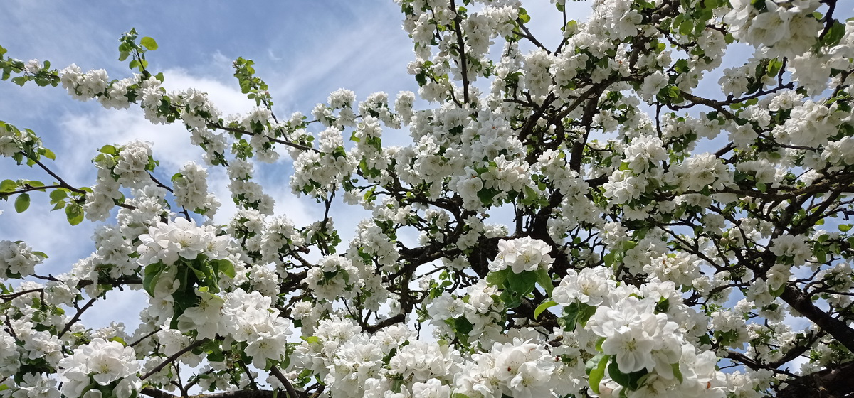 21 мая: какой сегодня праздник, что можно, а что нельзя делать в этот день