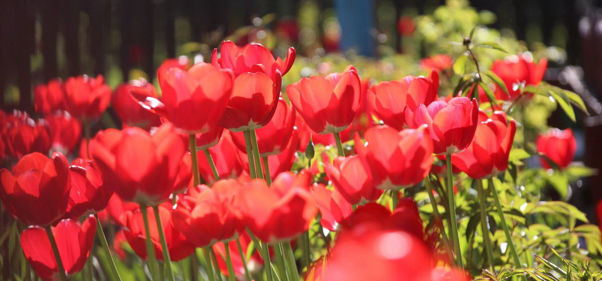 30 мая: какой сегодня праздник, что можно, а что нельзя делать в этот день