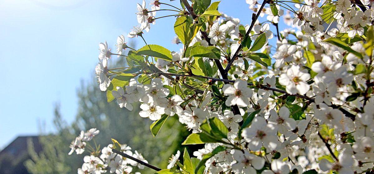 18 мая: какой сегодня праздник, что можно, а что нельзя делать в этот день