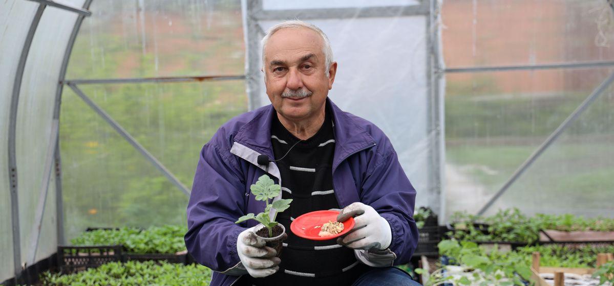 Секреты выращивания арбузов и дынь, а также других бахчевых культур на участке