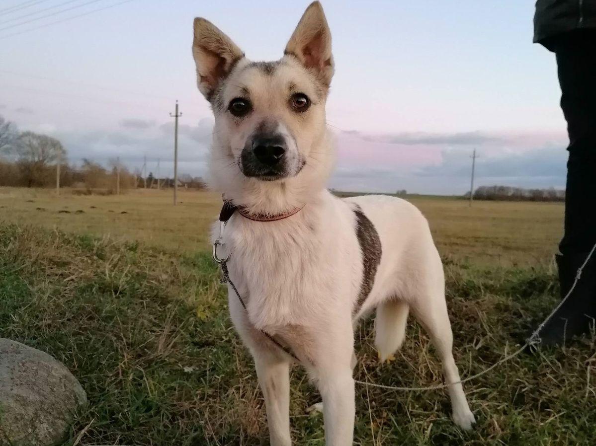 Белка очень хочет найти себе новый дом и семью, обещает быть преданной собакой. Фото: Людмила ШИБУТ
