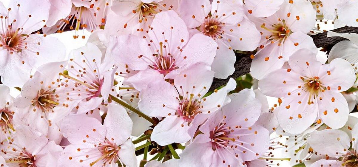 15 мая: какой сегодня праздник, что можно, а что нельзя делать в этот день
