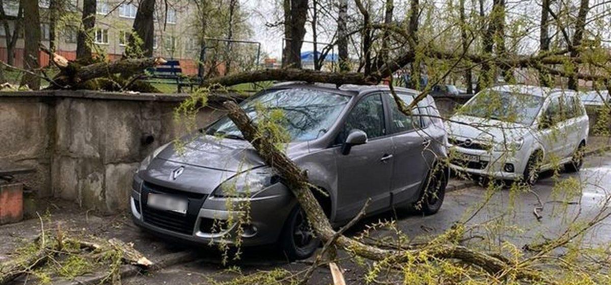 Дерево упало на припаркованную во дворе машину в Барановичах. Фотофакт