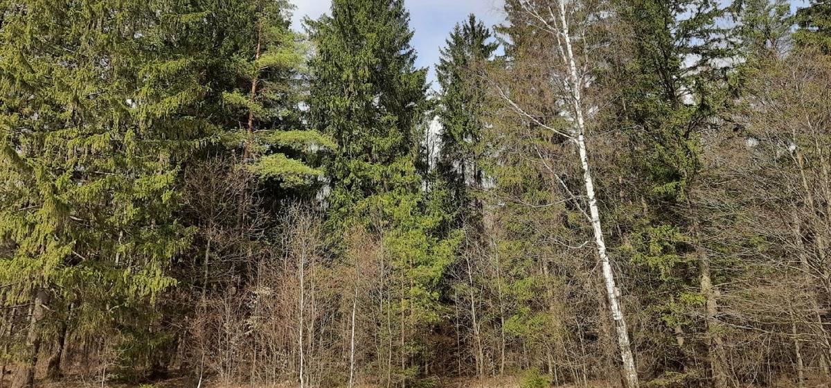 Как не заблудиться в лесу, рассказали в МЧС