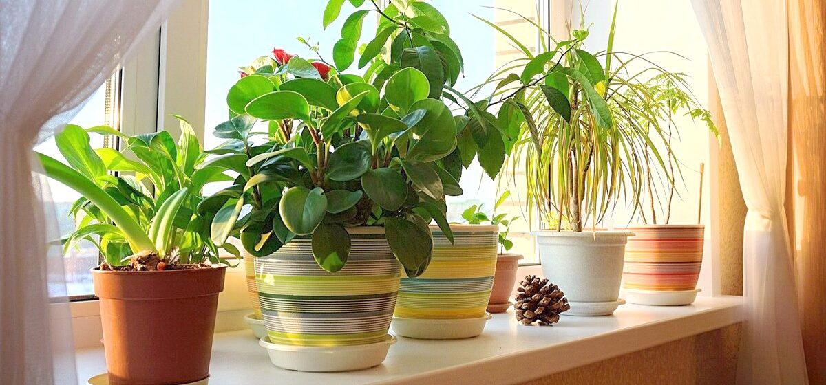 Комнатные растения, которые приносят счастье в семью